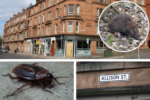 How many bugs and vermin have been reported on your street?