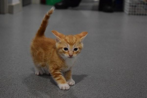 Six-week-old kitten found abandoned in bin after Milton resident heard its cries