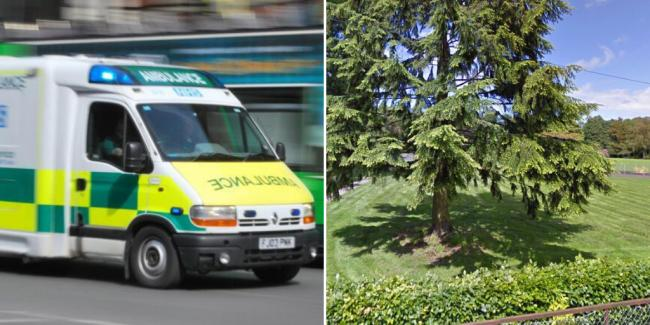 Boy dies in hospital after being found in wooded area next to primary school
