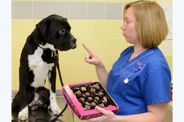 'Don't give dogs chocolate,' warn PDSA