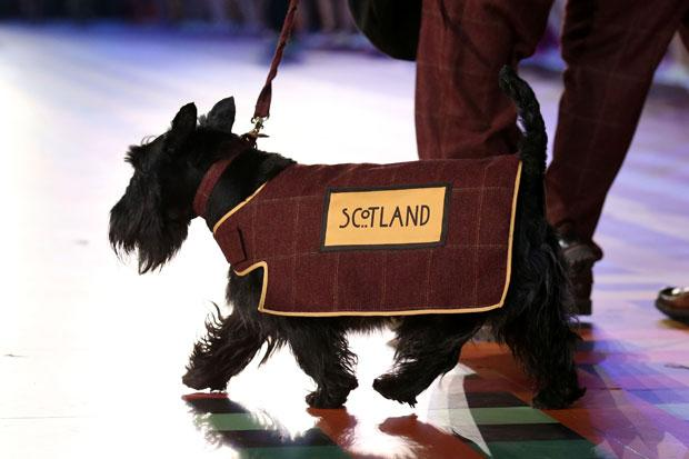 The real stars of the opening ceremony? Scottie dogs