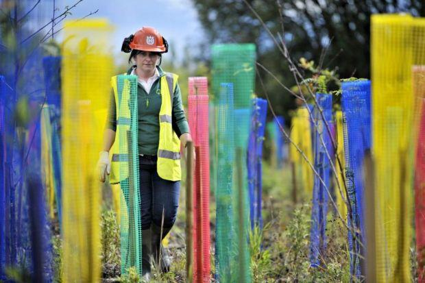 Project manager Joneen Clark takes a walk through newly-planted woodland at the under-construction Cuningar Loop Woodland Park in the east end of Glasgow near the Games Athletes Village                            Picture: Jamie Simpson