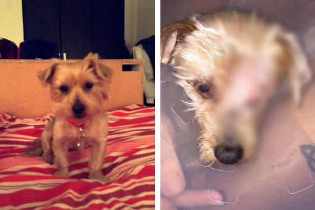 Dog Groomer Rubbishes Claims A Dog Was Forced To Have It S Eye