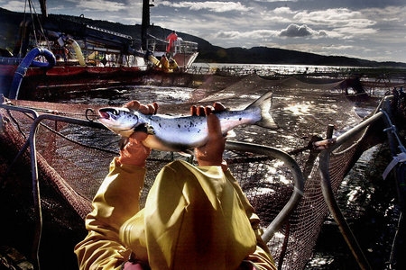Crackdown on fish farm pesticides after Sunday Herald investigation