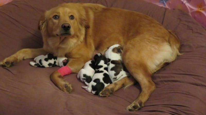 This rescue dog gave birth to different coloured puppies and looks just as confused as everyone else