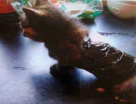 Police are hunting for cruel thugs who bound this kitten's legs with cable ties and wrapped its body in TAPE - to use it as bait for hunting dogs. See SWNS story SWKITTEN:  The tiny cat was found by a member of the public in woodland, barely able to m
