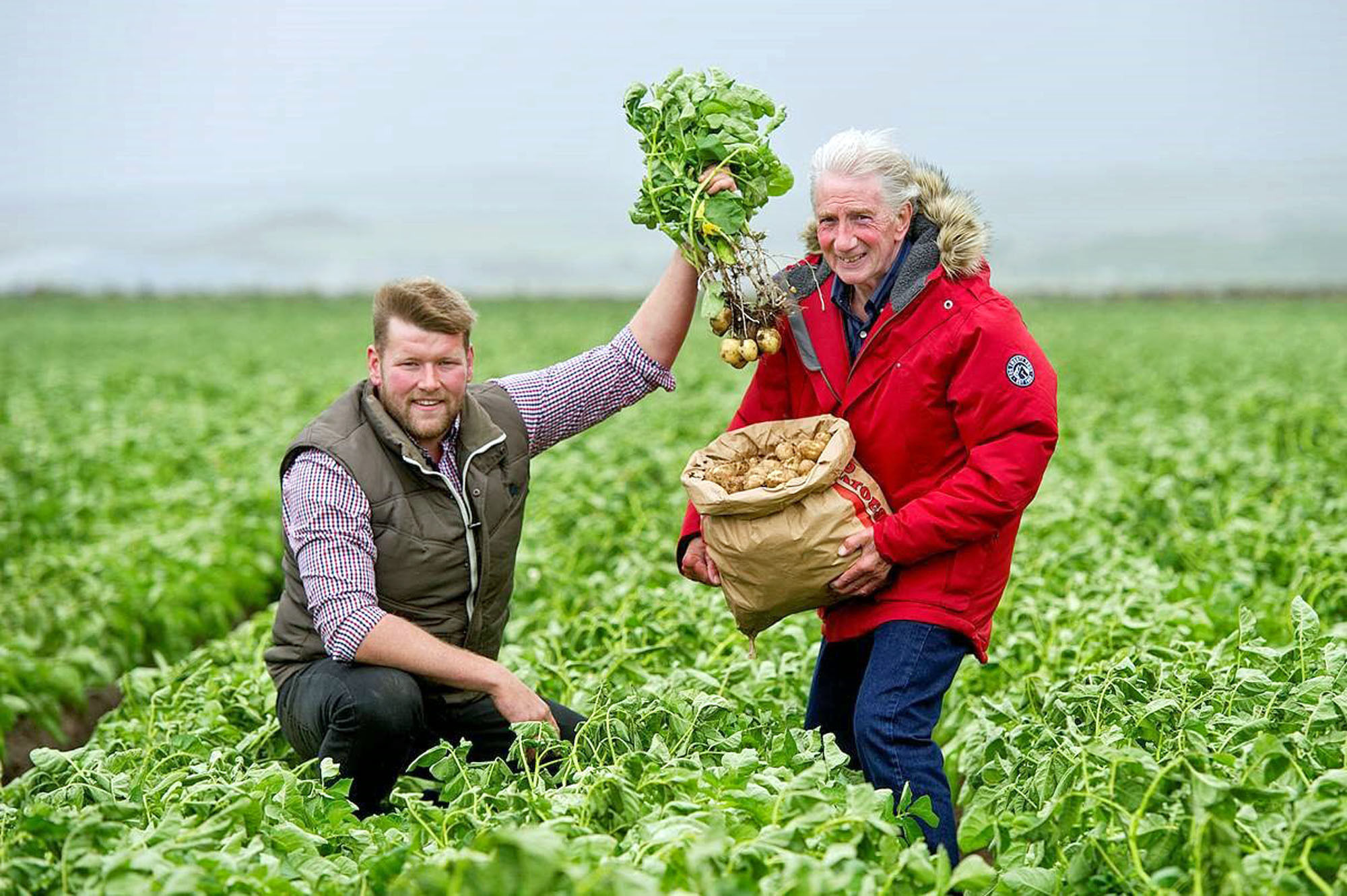 Potato picker: Man makes 1000-mile trip to Ayrshire to pick his favourite tatties
