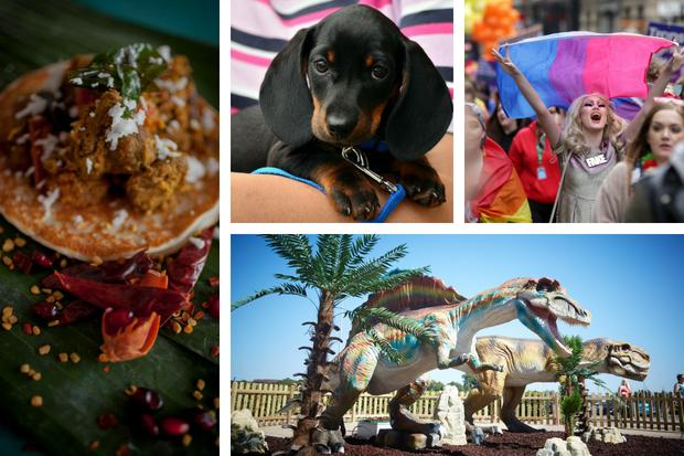 Indian Food Bazaar, Dachshund Café, Pride Glasgow and Roarsome Fun at the Fort