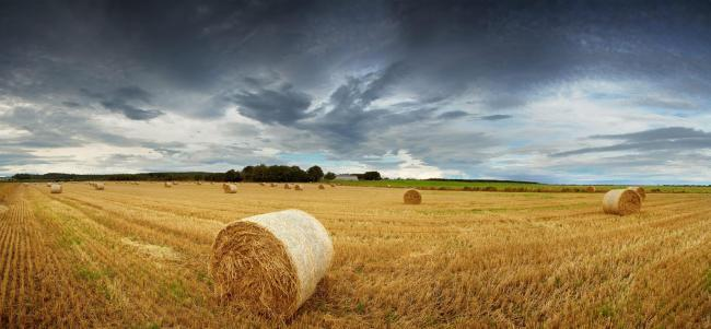 More than 100 hay bales destroyed during deliberate farm fire in Kilmarnock | Evening Times