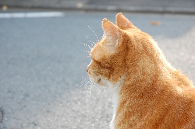Drivers who run over a cat could be required by law to report incident to police
