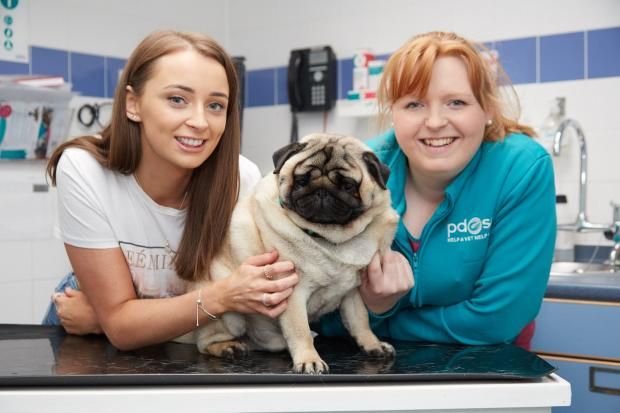 Podgy Glasgow pug Percy in running for top slimming prize