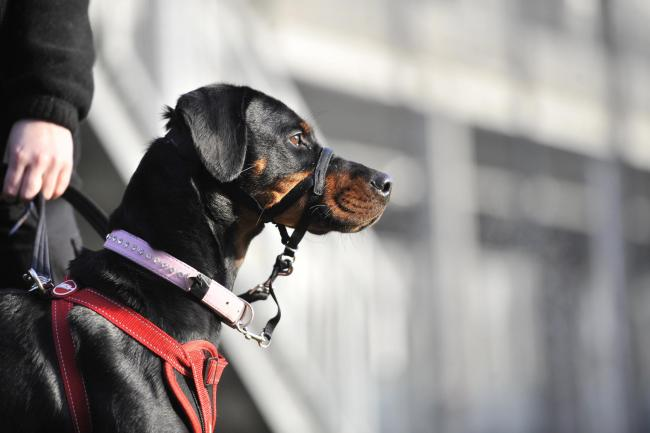Second-annual Dog Lover show coming to Glasgow's SEC