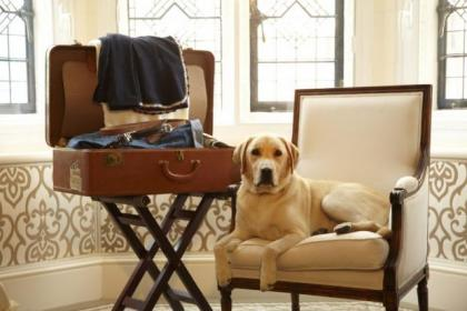 Will sir be dressing for din-dins?More and more hotels are happy to accommodate pets
